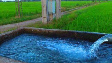 عکس از رایگان شدن برق کشاورزان در تابستان با یک راهکار ساده