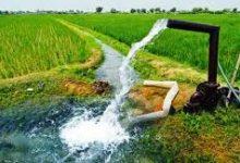 عکس از شرکت توانیر و پاداش کشاورزان